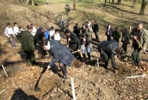 Circa două miliarde de puieţi forestieri plantate de Romsilva din 1991 şi până în prezent