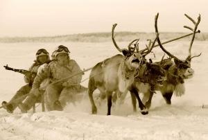 Renul care a provocat panică printre transportoarele blindate finlandeze