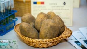 Clubul Fermierilor Români și Federația Național a Cartofului solicită sprijin cuplat pentru cartoful timpuriu și cel pentru sămânță
