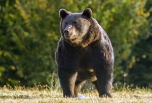 Moartea ursului Arthur schimbă legea. Tanczos Barna a comunicat decizia