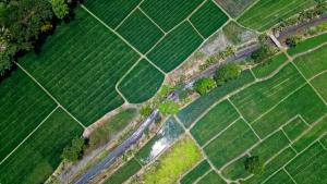 IoT, precision farming și biotehnologia - tendințele agritech care definesc viitorul agriculturii românești (raport)